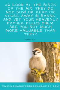 Matthew 6-26 A look at Birds in the Bible