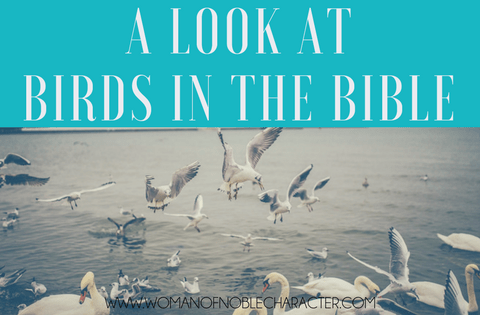 a look at birds in the Bible