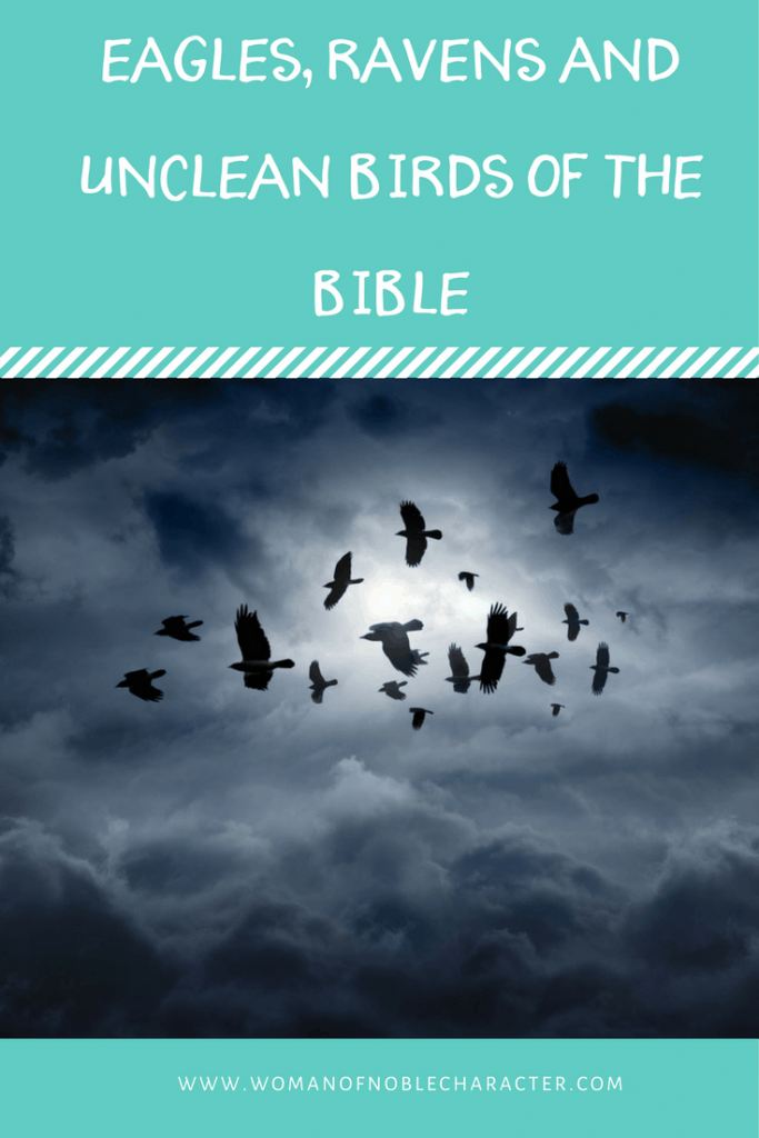 eagles, ravens and unclean birds of the Bible