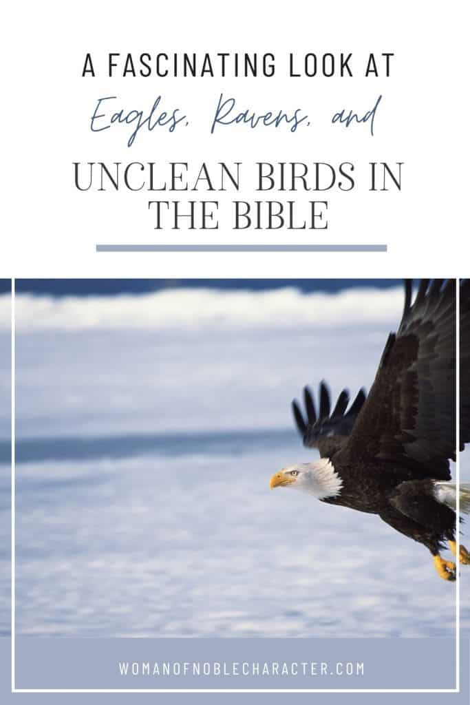 "An image of an eagle flying over water with an overlay of text that says, ""A Fascinating Look at Eagles, Ravens and Unclean Birds in the Bible"""