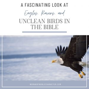 eagles flying, unclean birds of the Bible