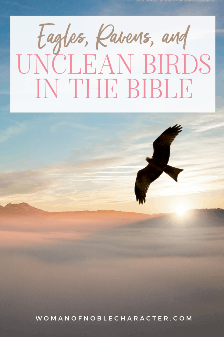 An image of an eagle soaring in the sky during the sunset with an overlay of text saying,