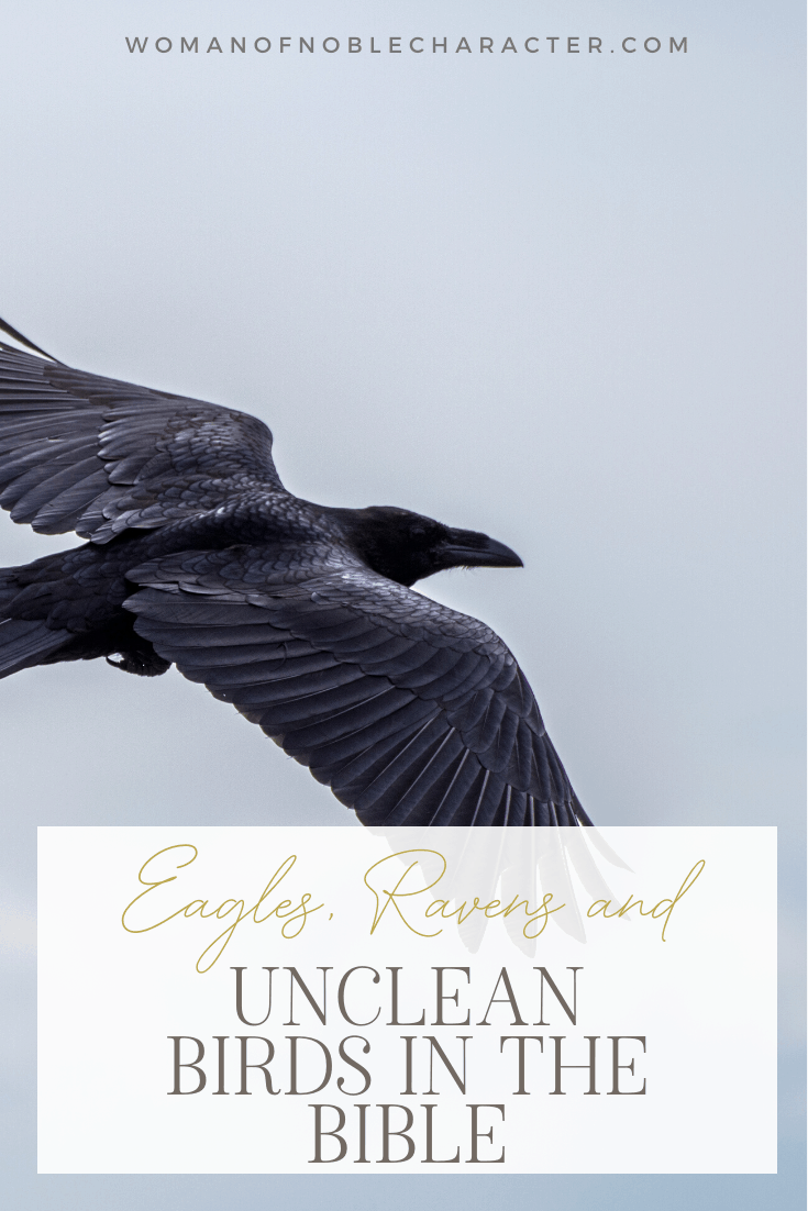 An image of a raven soaring in the sky with an overlay of text saying,