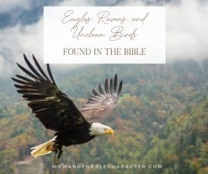 "An image of an eagle flying over land with an overlay of text that says, ""Eagles, Ravens and Unclean Birds in the Bible"""