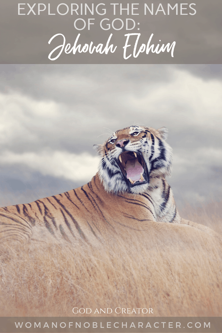 An image of a roaring tiger lying in a field and text that says Exploring the Names of God - Jehovah Elohim