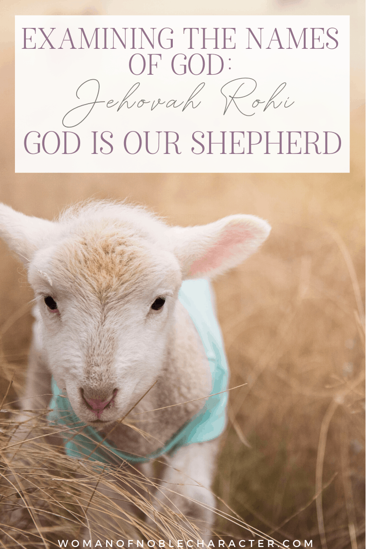 an image of a lamb in a field and text that says Examining the Names of God_ Jehovah Rohi, God is Our Shepherd