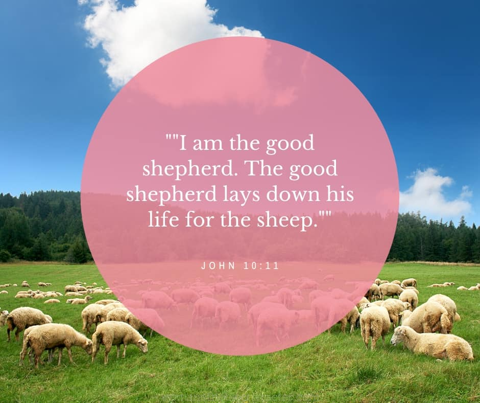 An image of sheep in a field with a pretty blue sky and John 10:11 quoted