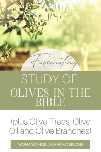 Olive tree, Olives in the Bible