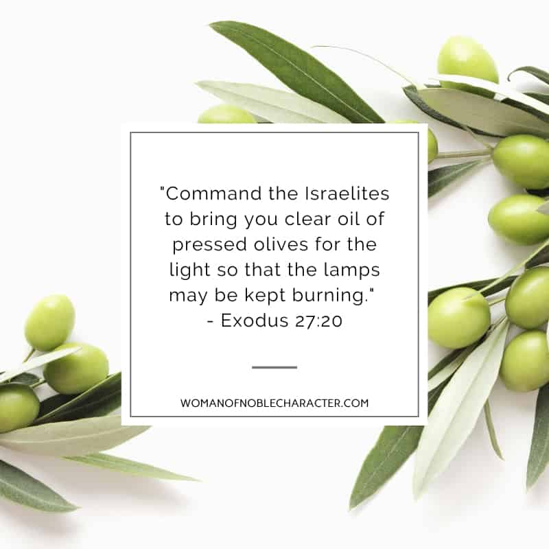 An image of green olives on the plant on a white background and Exodus 27:20 quoted