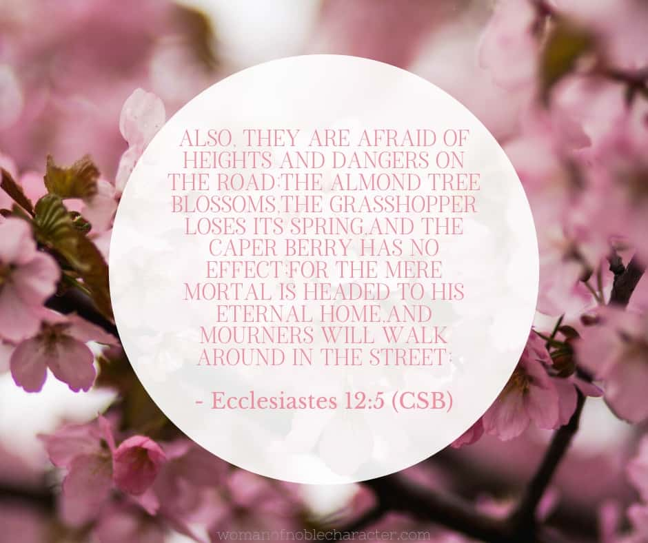 An image of cherry blossoms with the quote,