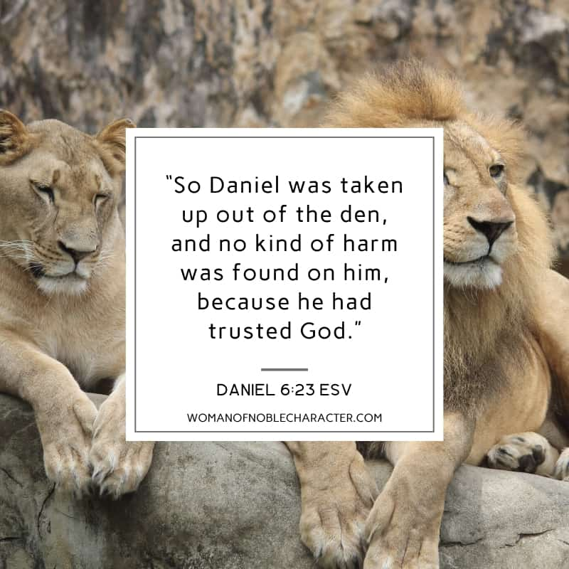 An image of a male and female lion laying on a rock and Daniel 6:23 quoted from ESV
