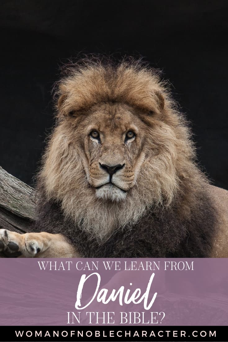 An image of a male lion on a rock and text that reads What Can We Learn From Daniel in the Bible?