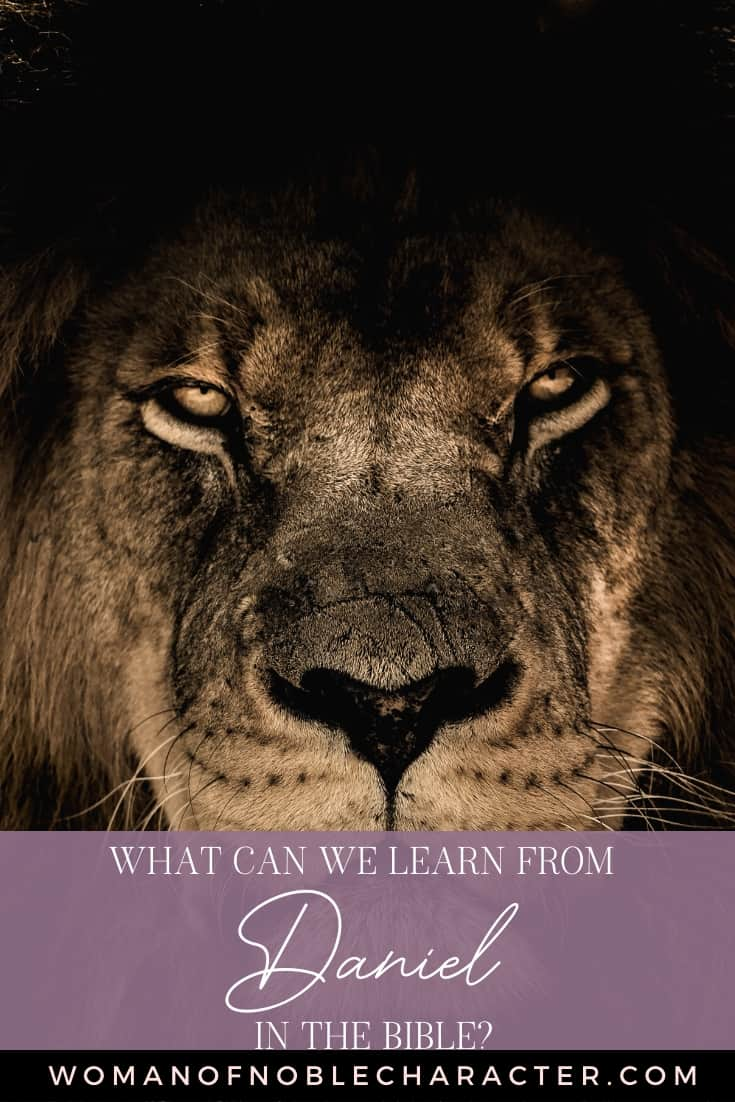 An image of a male lion's face close up and text that reads What Can We Learn From Daniel in the Bible?