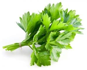 green coriander, spices in the Bible, bitter herbs