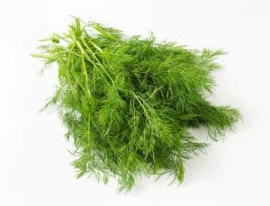 Sprigs of fresh dill weed, uses for biblical spices