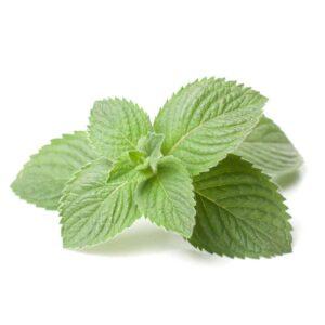fresh mint, biblical spices
