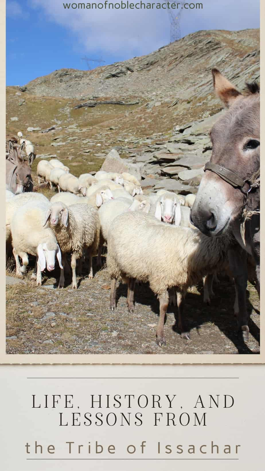 An image of a donkey surrounded by a lot of sheep with an overlay of text that says,