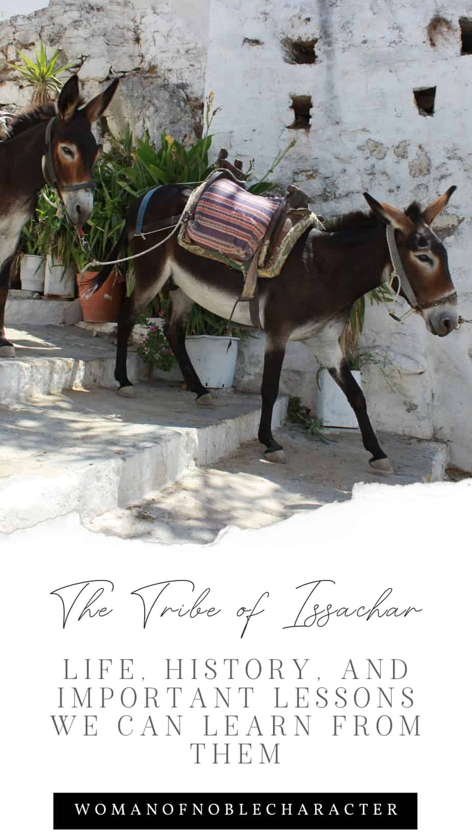 An image of a donkey walking down steps with an overlay of text that says,