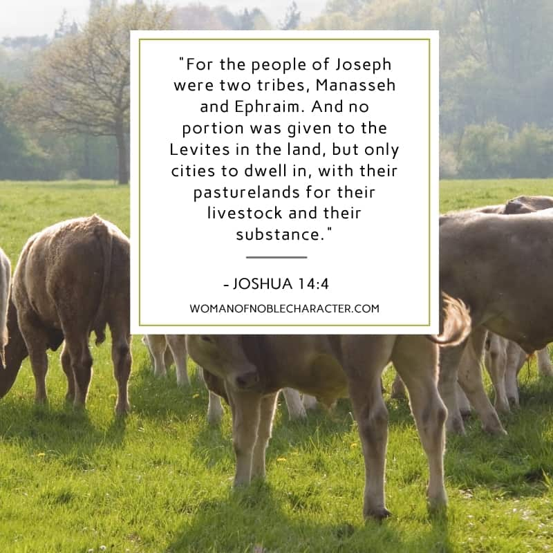 """An image of a herd of cows grazing on a grass field with the quote, """"""""For the people of Joseph were two tribes, Manasseh and Ephraim. And no portion was given to the Levites in the land, but only cities to dwell in, with their pasturelands for their livestock and their substance."""" from - Joshua 14:4"""