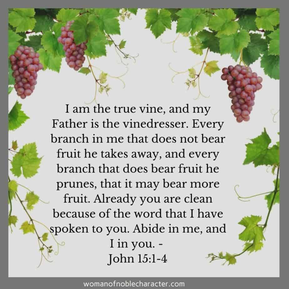 vine and grapes, abide in Him, John 15:1-4