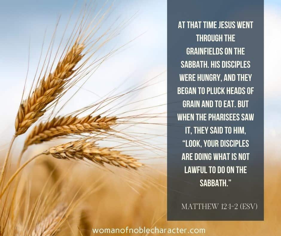 grain of wheat; matthew 12