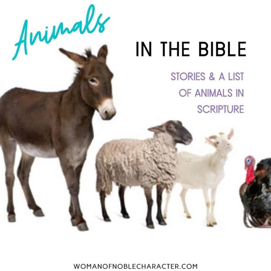 donkey, goat, sheep, rooster; animals of the Bible