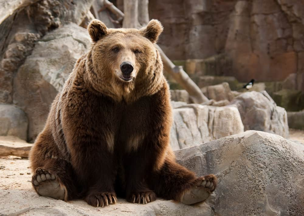 Funny brown bear and a bird on the background; animals in the Bible