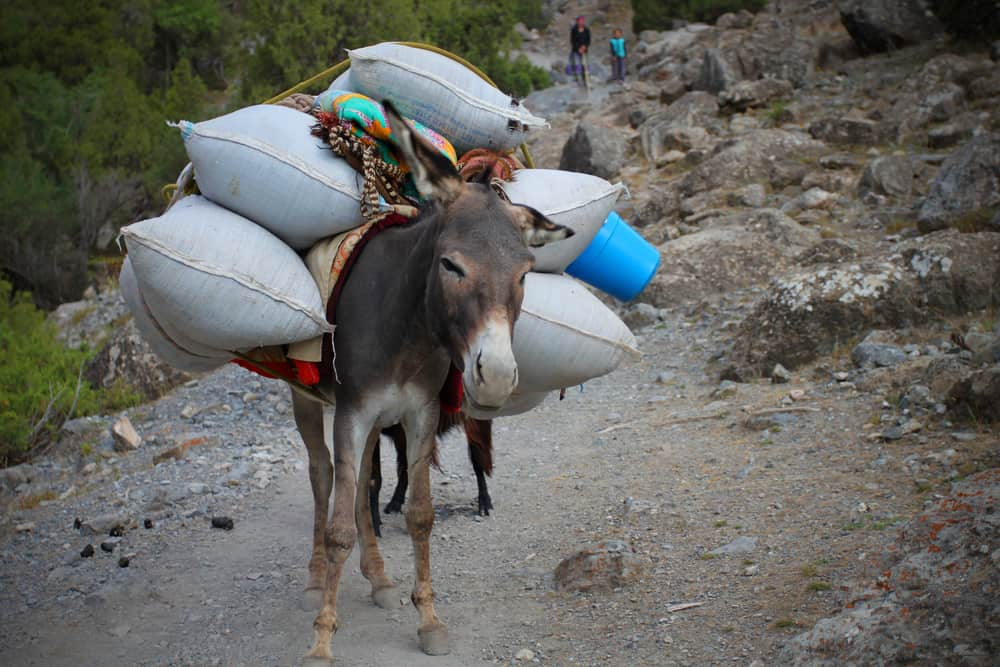 Donkey loaded with bags full of goods;  animals Bible verse