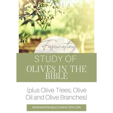 Olives in the Bible, olive trees in the Bible, olive oil in the Bible
